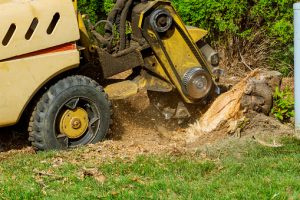 stump-removal-sydney